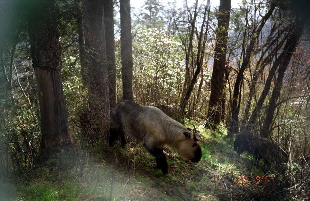 青羊区_四川雪宝顶国家级自然保护区-中国自然保护区